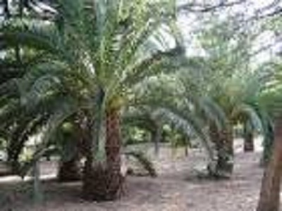 Jardin public de SBA (avant) 7