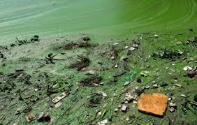 téléchargement lac pollué