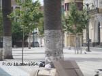 SAM_07581-150x112 dans Sidi bel abbes today !