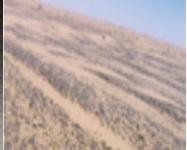 Sable vitrifié, contaminé sur des milliers d'hectares (Danger)