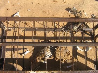 17 Novembre 2007, Hamoudia, Reggane: Trois Cages oubliées contenant des animaux (cobayes) exposés lors des explosions aériennes