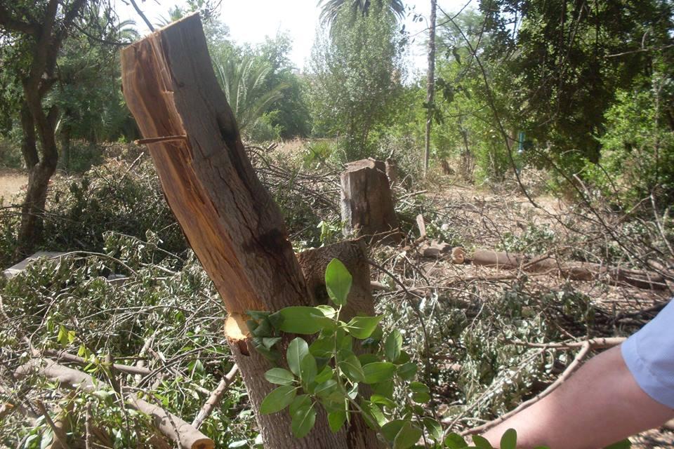 Sidi bel abbes massacre la tron onneuse au jardin for Au jardin info